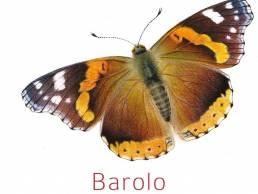 Camparo sommerfugletikett Barolo