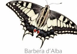 Camparo etikett Barbera d'Alba