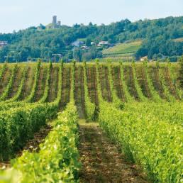 Delas vinmark Domaine des Grands Chemins3