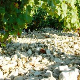 Foto av stein og vinranker, Moreau
