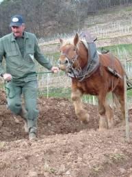 Schlumberger hesten Noé på jobb, foto