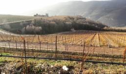 Santa Sofia foto fra vinmarken i Januar stille måned