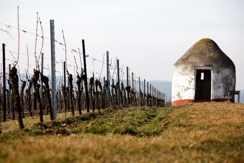 Wageck foto vinmark og lite hus